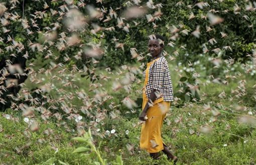 East Africa needs $76m in aid to fight worst locust outbreak in decades, UN warns