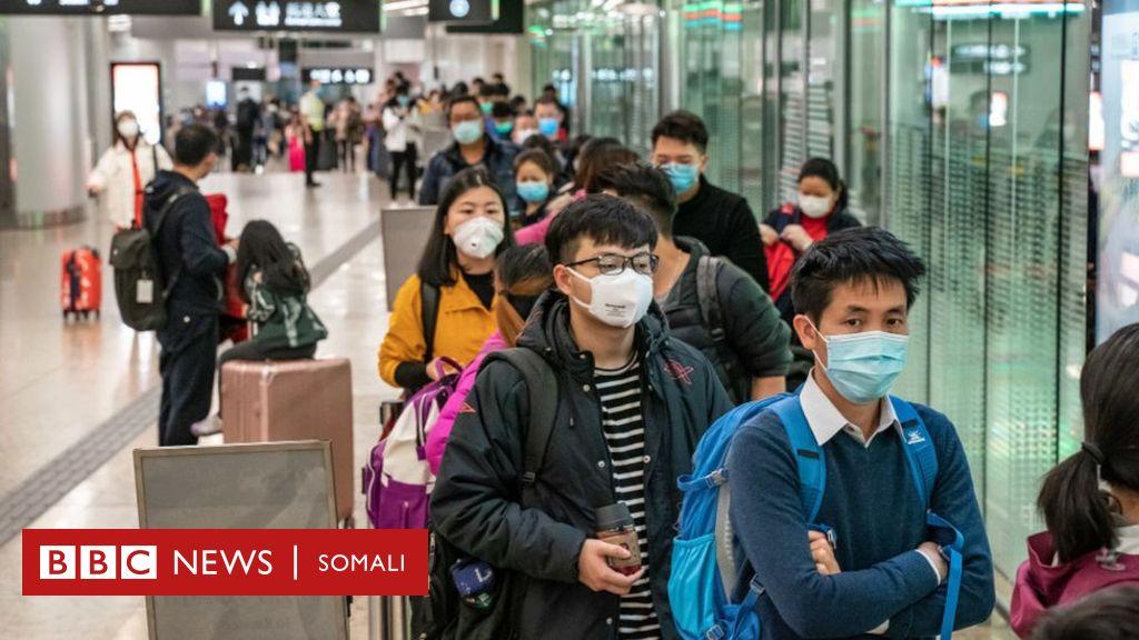 coronavirus:-maxay-tahay-sababta-ay-cudurrada-laga-qaado-xayawaanka-u-sii-kordhayaan?