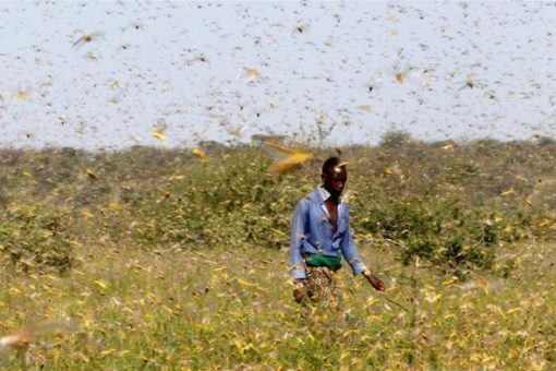 Somalia declares national emergency over locust surge