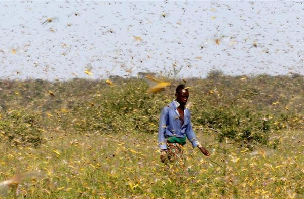 somalia-declares-national-emergency-over-locust-surge