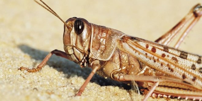 un-to-set-drones-on-east-africa-locusts