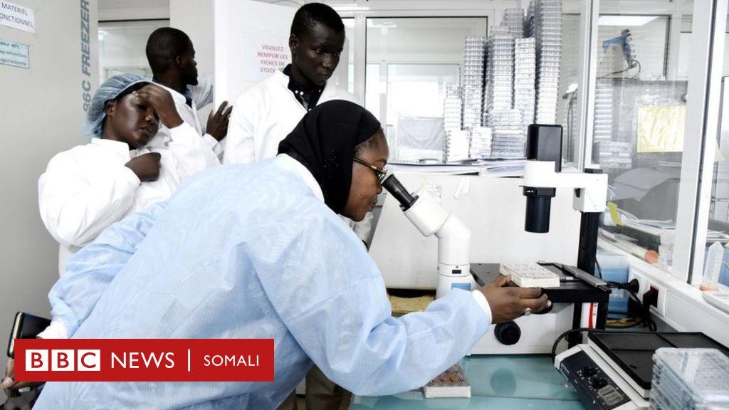 ka-jir-soomaaliya-coronavirus