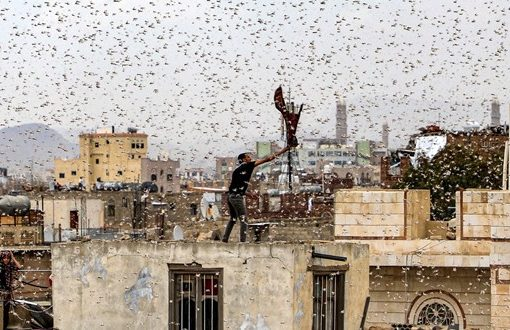 Locust crisis poses a danger to millions, forecasters warn