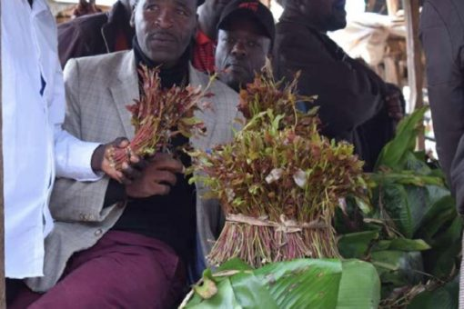 Kenya Assembly plans meeting over banning of miraa