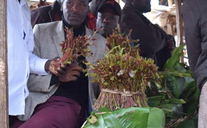 kenya-assembly-plans-meeting-over-banning-of-miraa