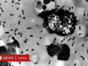 siinaha-iyo-bubonic-plague:-xanuun-ay-mar-50-milyan-oo-qof-u-dhimatay-oo-haddana-shiinaha-lagu-arkay