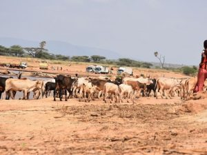 two-killed,-four-hurt-in-herders'-shootout-on-isiolo-garissa-border