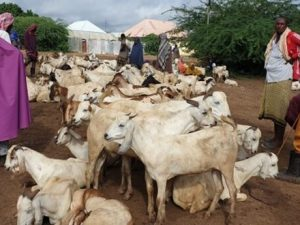 somali-herders-and-families-left-stranded-by-shabelle-river-floods