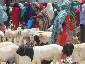 new-livestock-market-in-central-somalia-boosts-trade