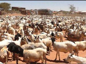 jabuuti-oo-la-wareegaysa-badi-xoolihii-ka-dhoofi-jiray-somaliland-iyo-halista-dhaqaale-ee-somaliland-ku-wajahan
