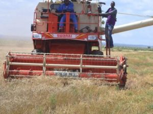central-somali-pastoralists-decry-grabbing-of-grazing-land