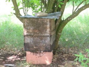 bees-bring-new-livelihood-to-bakool-villagers