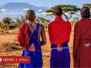 masai:-maxaad-ka-taqaana-deeganka-libaaxa-iyo-aadanaha-ay-sida-nabadda-ah-ugu-wada-nool-yihin