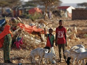 puntland-herders-desperate-for-water-to-keep-goats-alive